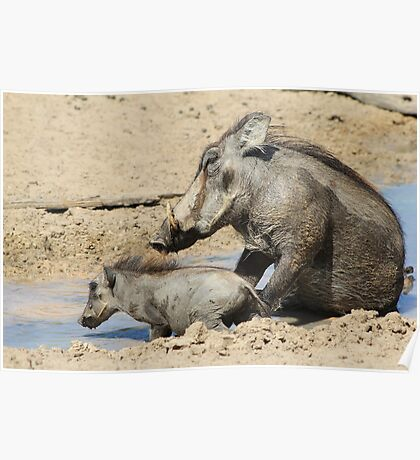 Warthog - African Wildlife Background - Animal Babies Poster