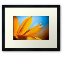 Extreme close up of a yellow daisy with a blue sky background  Framed Print
