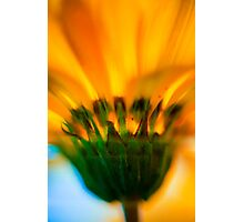 Extreme close up of a yellow daisy with a blue sky background  Photographic Print