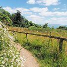 Along The Coastal Path - Lyme Regis by Susie Peek
