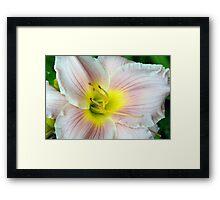 Macro on white summer flower. Framed Print