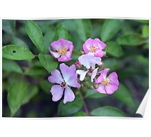 Small purple flowers on green leaves background. Poster