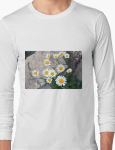 Beautiful small white flowers on the pavement. Long Sleeve T-Shirt