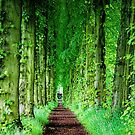 Lady Lucy's Walk by wallarooimages