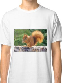 Red Squirrel with Nuts Classic T-Shirt