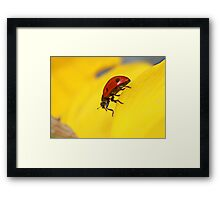 What are you looking at ?? Framed Print