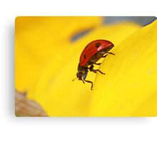 What are you looking at ?? Canvas Print
