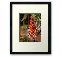 Aloe Vera Flower Framed Print