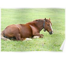 Horses grazing in a green meadow  Poster