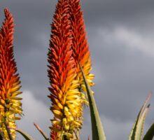 Aloe Vera Flowers Sticker