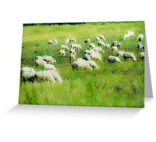 soft focus A flock of sheep graze in a green meadow  Greeting Card
