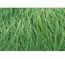 Relaxing Grass Photographic Print