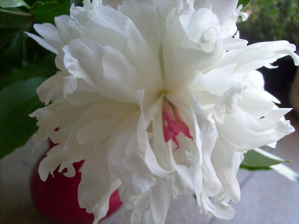White.... by Ana Belaj