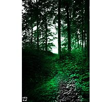 Emerald Forest Photographic Print