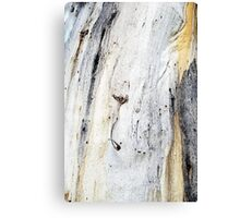Down to Earth - Textured Bark Canvas Print