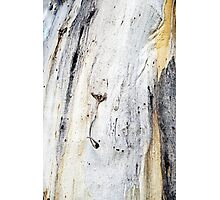 Down to Earth - Textured Bark Photographic Print