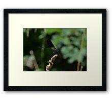 59 - libellula Framed Print