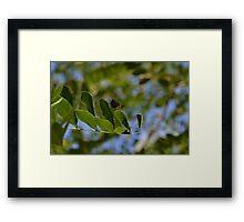 157 - libellula Framed Print