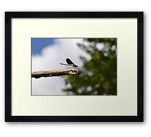 160 - libellula Framed Print