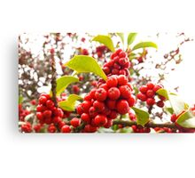 Spring Colors at best Canvas Print