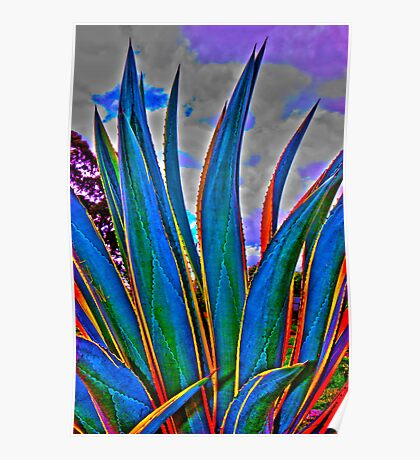 Agave HDR Poster