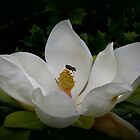 Giant Magnolia with visitor by Thea 65