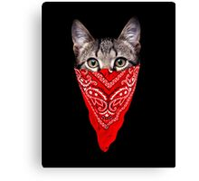 Gangster Cat Canvas Print