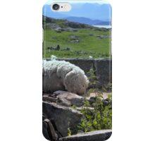 Resting Sheep iPhone Case/Skin