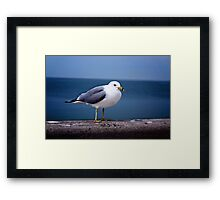 Fred the Seagull  Framed Print