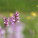 A meadow of orchids by miradorpictures