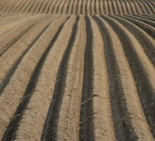 Field of Furrows by Clayton Suares