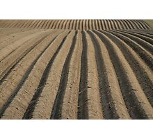 Field of Furrows Photographic Print