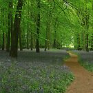 The winding path of spring by miradorpictures