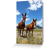 Roadside Buddies Greeting Card