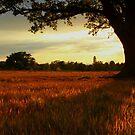 Tree Shadow by carolhynes