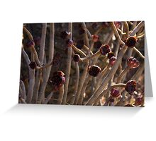 Alien Plantlife - Peculiar Succulent Plants With Beautiful Maroon Rosettes Greeting Card