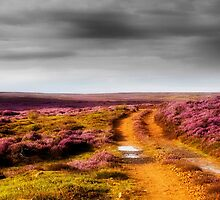 On The Moors by maureen bracewell