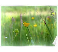 The Buttercup Poster