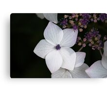 Purple and Blue Hydrangea  Canvas Print