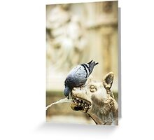 Pigeon and Wolf - Siena, Italy Greeting Card
