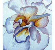 Translucent Blossom (2 of 3) Photographic Print