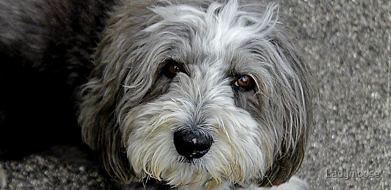 Cassie Bonny Lassie by Ladymoose