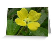 Narrow-Leaf Water Primrose, Mexican Primrose-Willow Greeting Card