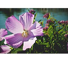Purple Blooms Photographic Print