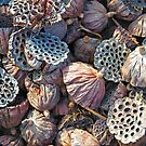 Dried Seed Pods by Eileen McVey