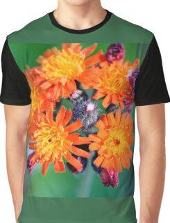 Devil's Paintbrush - Pilosella aurantiaca Graphic T-Shirt