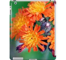 Devil's Paintbrush - Pilosella aurantiaca iPad Case/Skin