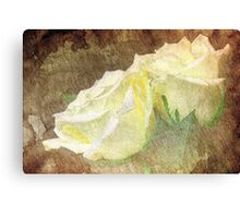 A painting of a two white of Roses Canvas Print