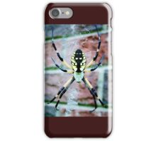Black and Yellow Argiope Spider (Orb Weaver) iPhone Case/Skin