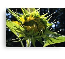 Sunflower On Film Canvas Print